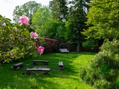 How to get rid of swamp smell in yard