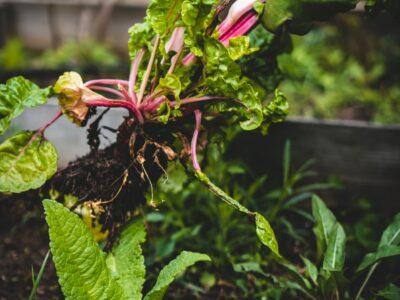 Is Landscape Fabric Safe for Vegetable Gardens?