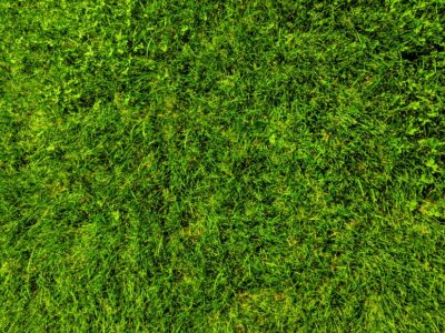 How long can grass seed go without water?